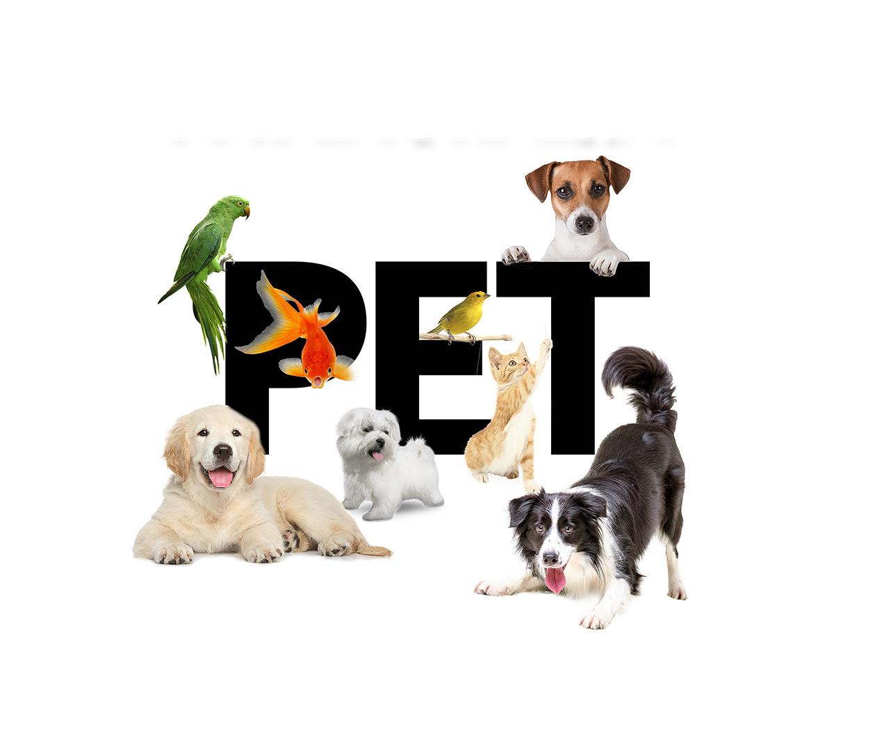PET. Eu amo o meu amigão. Eles fazem parte da família
