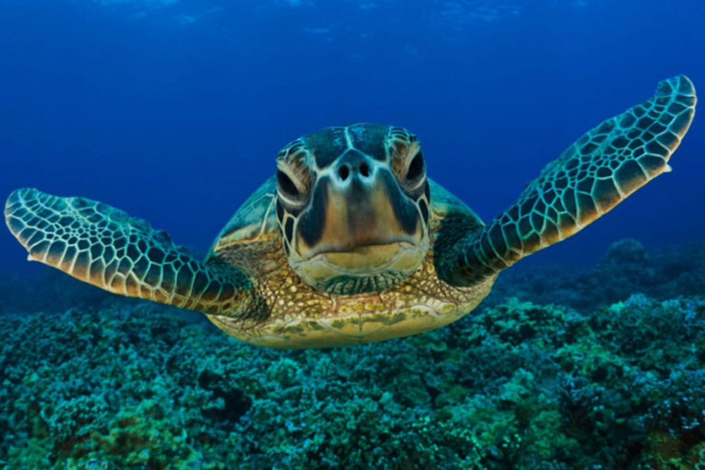 Fotografe tartarugas
