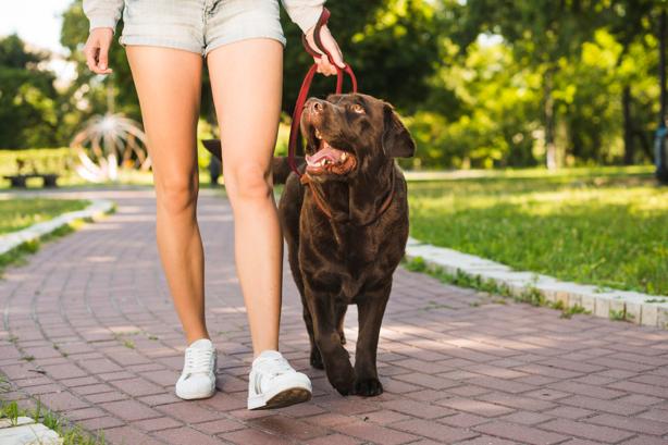 Leve para passear os seus animais de estimação e não os microrganismos deles