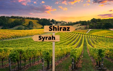 Syrah ou Shiraz?
